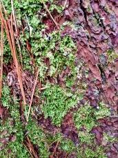 Hartwick Pines 01