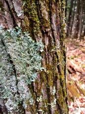 Hartwick Pines 03
