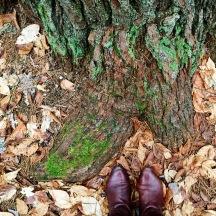 Hartwick Pines 06