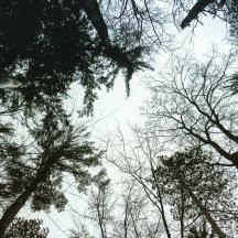 Hartwick Pines 07